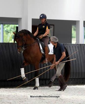 Manolo Mendez-Training for Wellness™ Dressurlehrgang