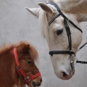 "OEPS-Referat ""Unser Partner Pferd"" hilft Pferden in Not. © privat"