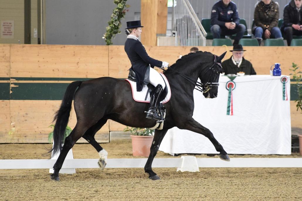 68,765% und damit der Sieg im Grand Prix Special für Franziska Fries und Atomic 2 bei der Sichtung im Magna Racino. © HORSIC.com