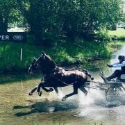Platz 6 für Erwin Gillinger (NÖ) im Marathon bei der Royal Windsor Horse Show. © privat