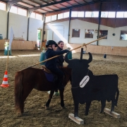 Working Equitation Training in Tulln mit Astrid Wehofschitz. © privat