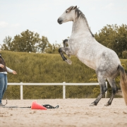 Die Mensch-Pferd-Beziehung steht bei den Parelli Games im Mittelpunkt. © privat