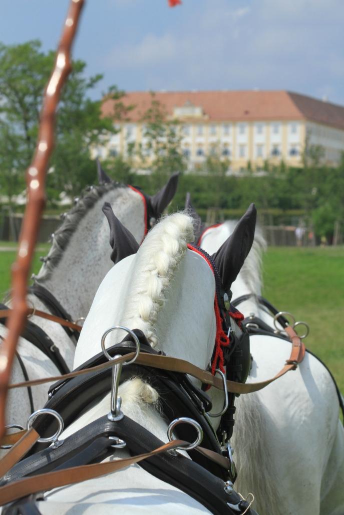 Staats- und Landesmeisterschaft auf Schloss Hof.