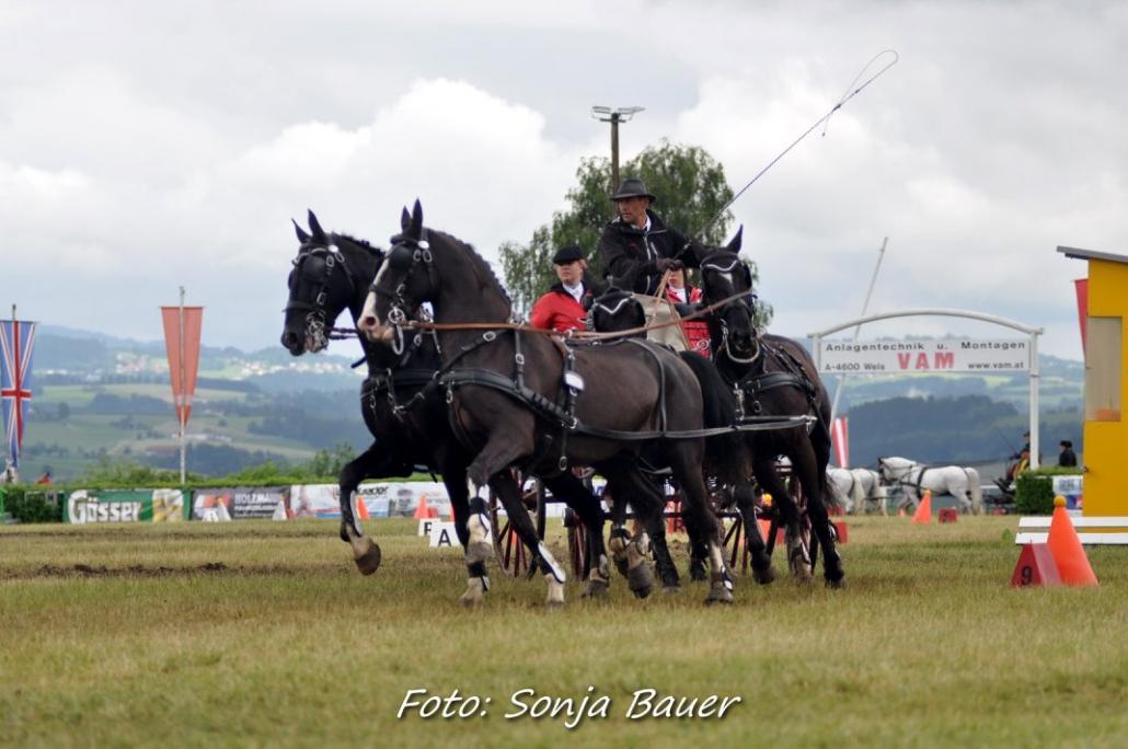 Christian Schlögelhofer fuhr beim CAI3* Altenfelden (OÖ) zum Österreichischen Meistertitel der Vierspänner. © Sonja Bauer