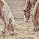 Bei den Überlegungen, ob und wie weit sich Heu durch Stroh ersetzen lässt, gilt es also zu beachten, dass Stroh zwar ebenfalls das Kaubedürf¬nis des Pferdes deckt, dabei jedoch weniger Speichel produziert wird als bei der Heufütte¬rung. © pixabay