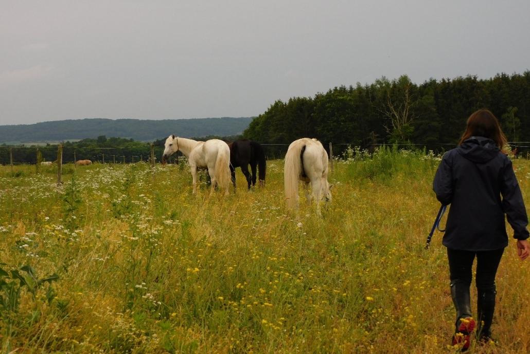Wanderreiten vom Mittelburgenland in die Steiermark: Ein Bericht von Edith Leitner   Tag 03. © privat