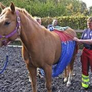 Das Anlegen eines Bergenetzes ist einfach in der Handhabung. Foto (c) Dorothee Philipp/facebook.com_badischezeitung.de