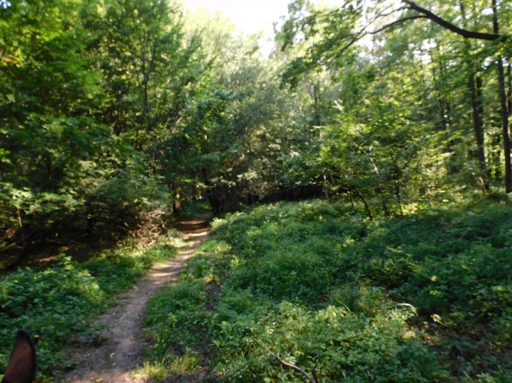 Wanderreiten im Wienerwald - ein Bericht von Edith Leitner. © privat