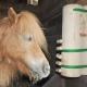 Das Tagebuch des Mini-Shetlandponys Wiesje erzählt diesmal davon, wie der Wingold Futterspender dabei hilft, die Langeweile an Regentagen zu vertreiben. © privat