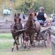 Platz 13 bei der FEI WM Fahren Pony für den amtierenden Bundesmeister Zweispänner, Roman Elend. © Krisztina Horvath