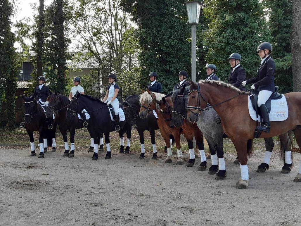 Niederösterreichs Noriker-Reiter bei den BM in Stadl Paura. © Manuela Baldauf