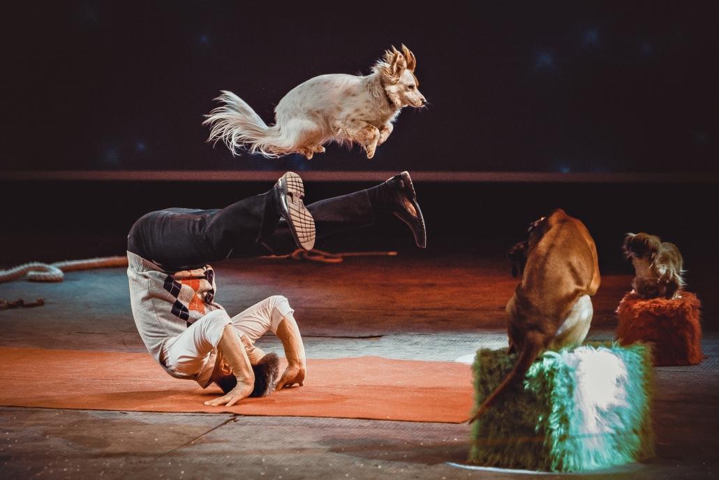 Tägliches Highlight bei der Amadeus Horse Indoors: die große Show mit internationalen Stars wie Leonid Beljakov aus Moskau. © ZVG