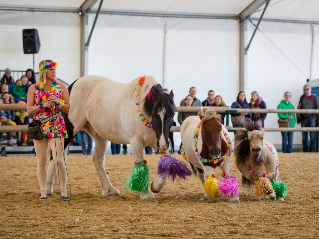 Pferdesport, Messe und Show bei der Apropos Pferd in der Arena Nova in Wr. Neustadt. © Michael Graf