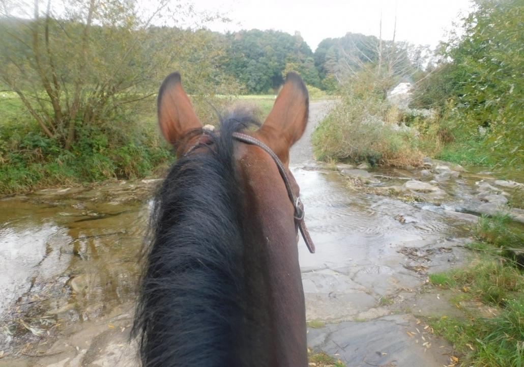 Timbro überlegt ob er dieses veralgte Wasser überhaupt betreten will - er muss.