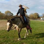 Für manche Pferde ist die Gewöhnung an den Falken anscheinend eine Kleinigkeit. © privat