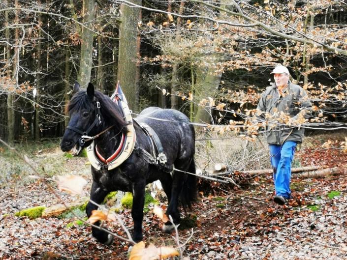 Holzrückekurs im URFV Allhartsberg. © URFV Allhartsberg