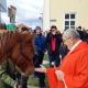 Impressionen: Der Reithof Gallbrunn ist zum 10. Mal beim Stephani-Ritt mit Pferdesegnung dabei. © privat