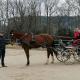 Training mit Top-Vierspännerfahrer Glenn Geerts (BEL) im URFV Allhartsberg. © privat
