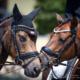Begeisterung wird mehr, wenn man sie teilt, denn WIR sind Pferdesport. © Andreas Schnitzlhuber